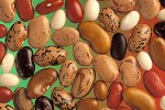 Phaseolus_vulgaris_seed1