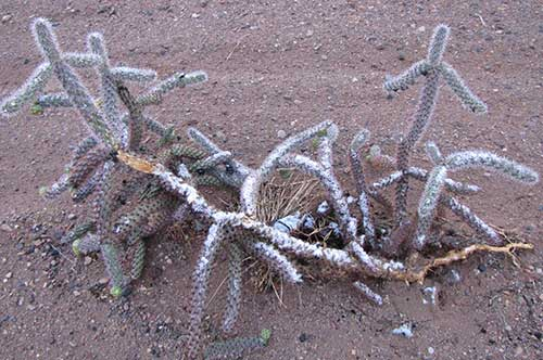 ponchovilladecember-cactus-snow