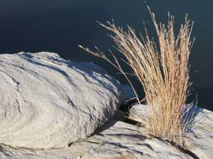 rocks and dry grass by the shores of Sumner Lake