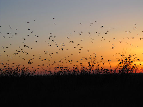 Sunset Birds at Lea Lake, 2