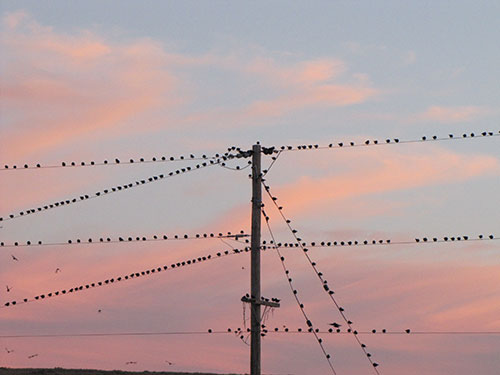 Sunset Birds at Lea Lake, 3