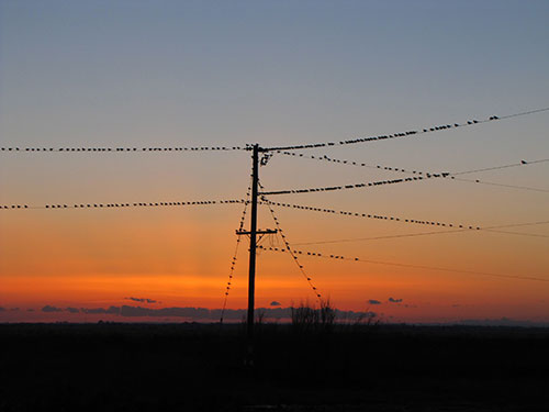Sunset Birds at Lea Lake, 4
