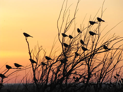 Sunset Birds at Lea Lake, 5