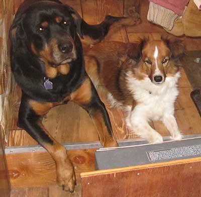 janblizzard-dogs