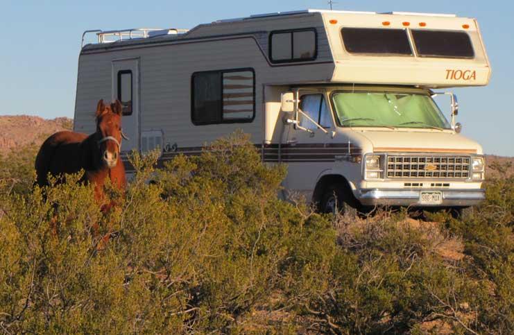 onland-horse