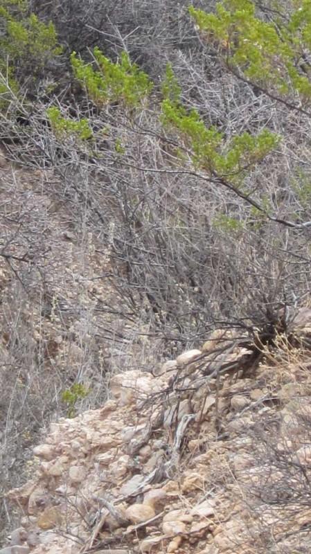 monticello=hiking