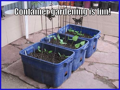 self-watering garden containers made from storage containers
