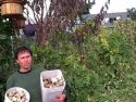 Why Are Jerusalem Artichokes Great in Your Garden?