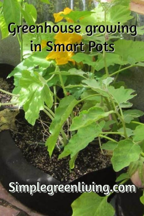 stencil.pinterest-post-greenhouse-smartpots
