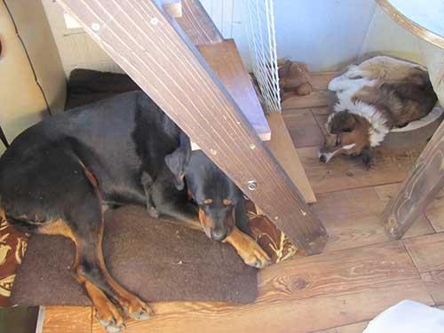 claytonlake2-dogsdozing